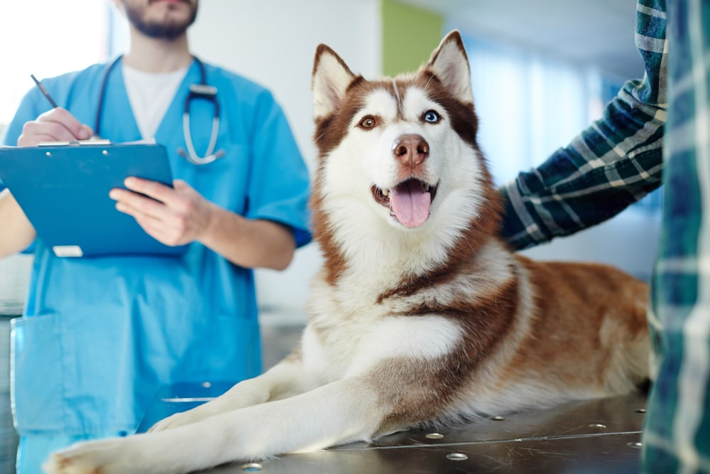 Services Provided from Our El Paso veterinarian